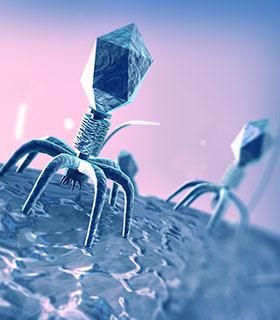 hizmetlerimiz_bakteriyofaz-tedavisi