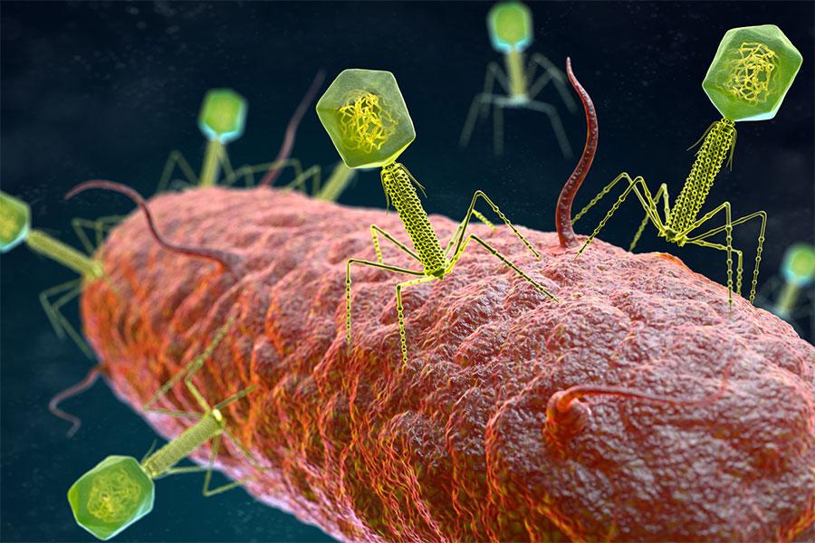 bakteriyofaj